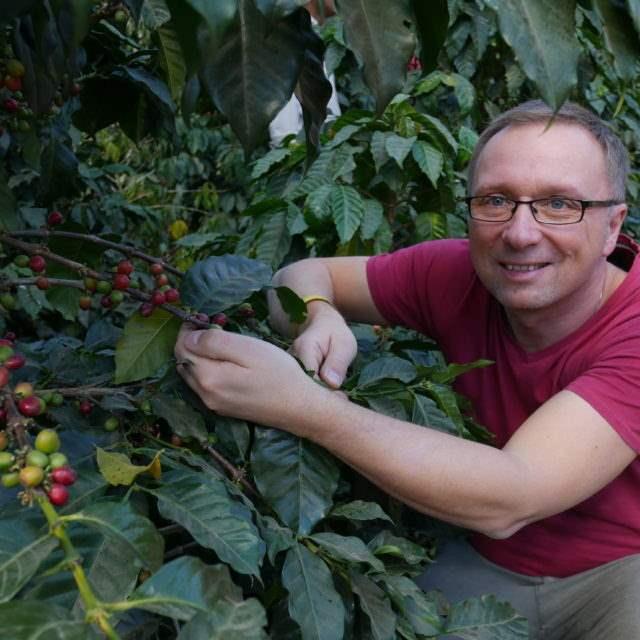 kawa gdzie rośnie