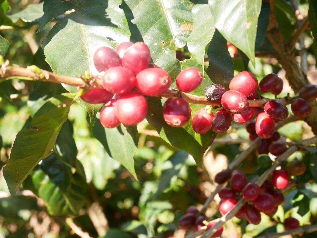 kawa świeżo palona warszawa